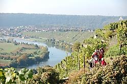 Weinwanderung 2010_7