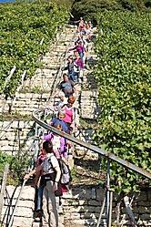 Weinwanderung 2010_8